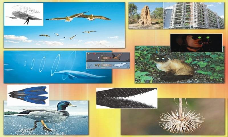 doğadan ilham alan teknolojiler