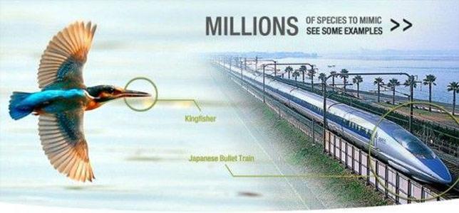 Doğadan ilham alınarak tasarlanan hızlı trenler