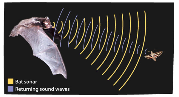 Yarasadan ilham alınarak tasarlanan ultrason teknolojisi