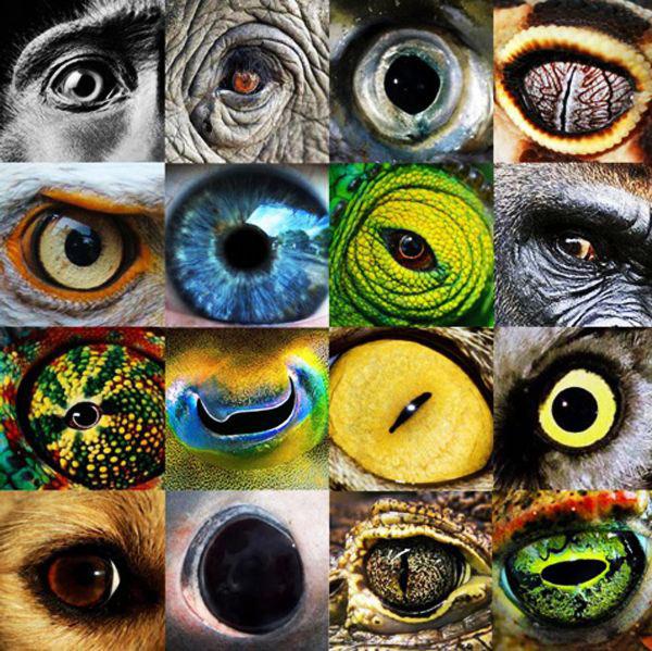 Doğadaki canlılar dünyayı nasıl görür?