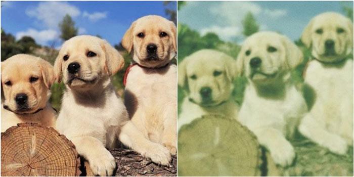 Köpekler dünyayı nasıl görür?