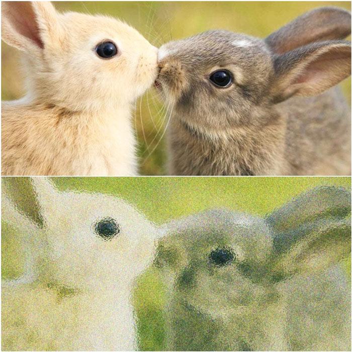 Tavşanlar nasıl görürler ?