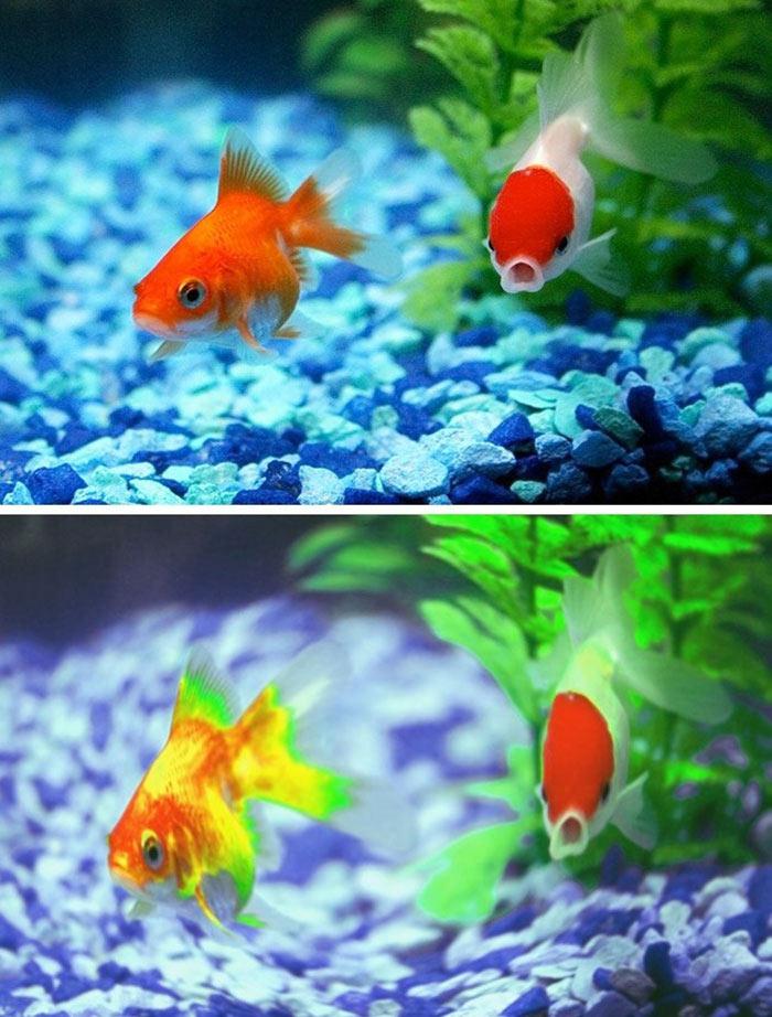 Balıklar nasıl görür?