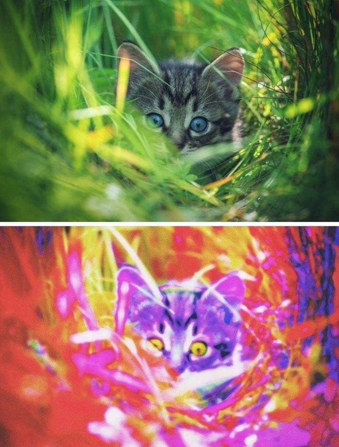 Doğadaki canlılar  nasıl görürler?