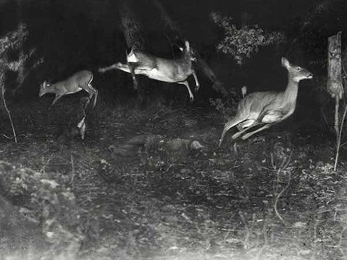 İlk National Geographic Vahşi Yaşam Fotoğrafı