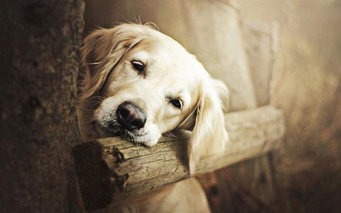 Evcil Hayvanlar Sokağa Bırakılmamalıdır!!!