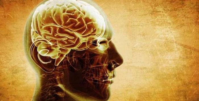 Beynimiz neden küçülüyor?