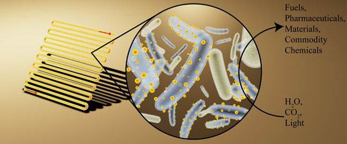 Bakteriler hangi alanlarda kullanılır