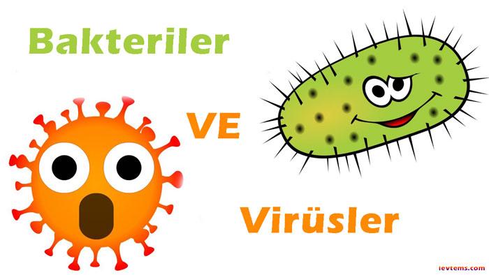 Bakteri ve virüs nedir?