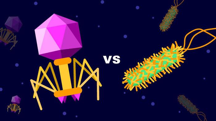 Bakteri ve virüs arasındaki farklar