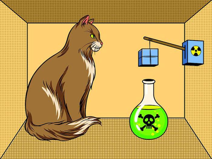 schrödinger kedi deneyi kuantum fiziği