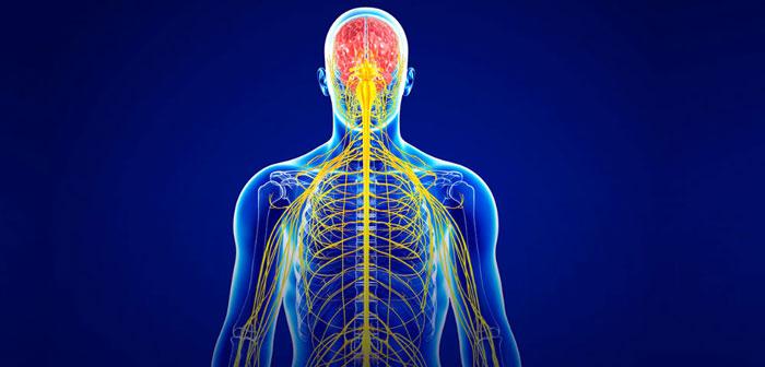 Sinir sistemi yapısı